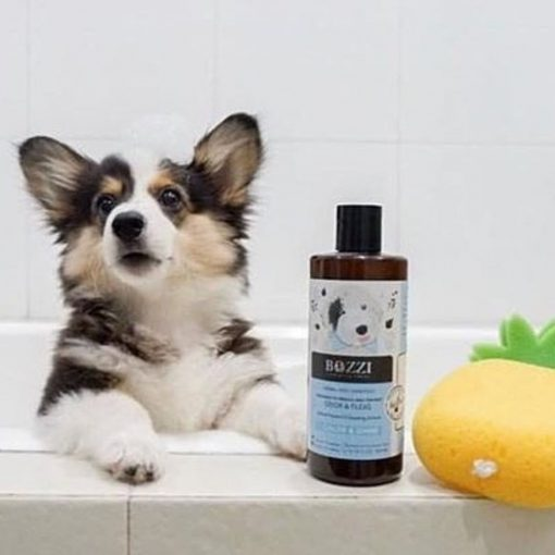 Natural dog shampoo Color&Shine BOZZI