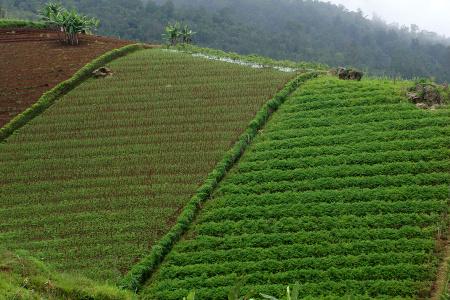 Натуральные травяные чаи Siamy
