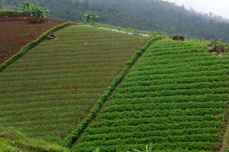 Siamy สมุนไพรไทยอบแห้ง จากธรรมชาติ 100 %